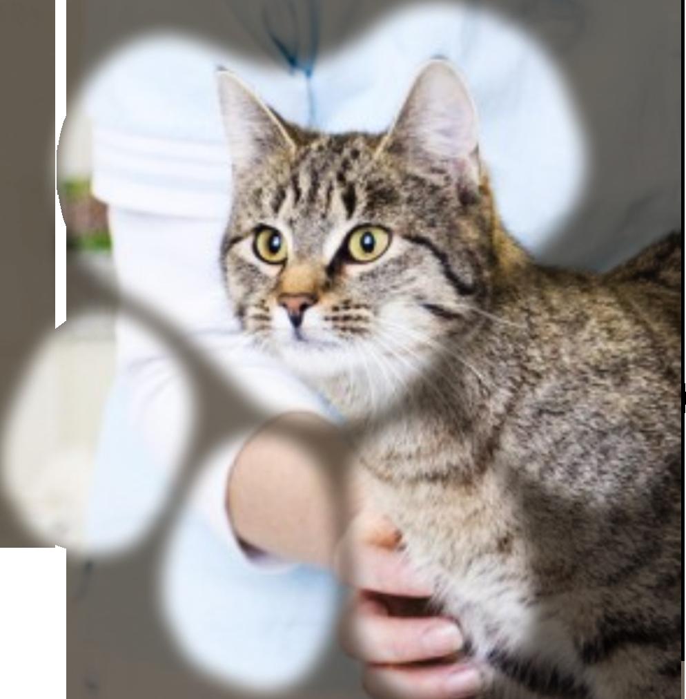 Tierarzt 4 Pfoten