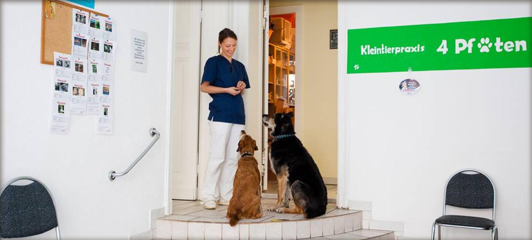 Tierarzt-Lichtenberg-Kleintierpraxis-4-Pfoten-und-Co-Praxis